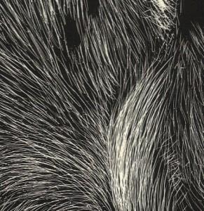 60252-tiger_eye_scratchboard_2007_detail_02-291x300