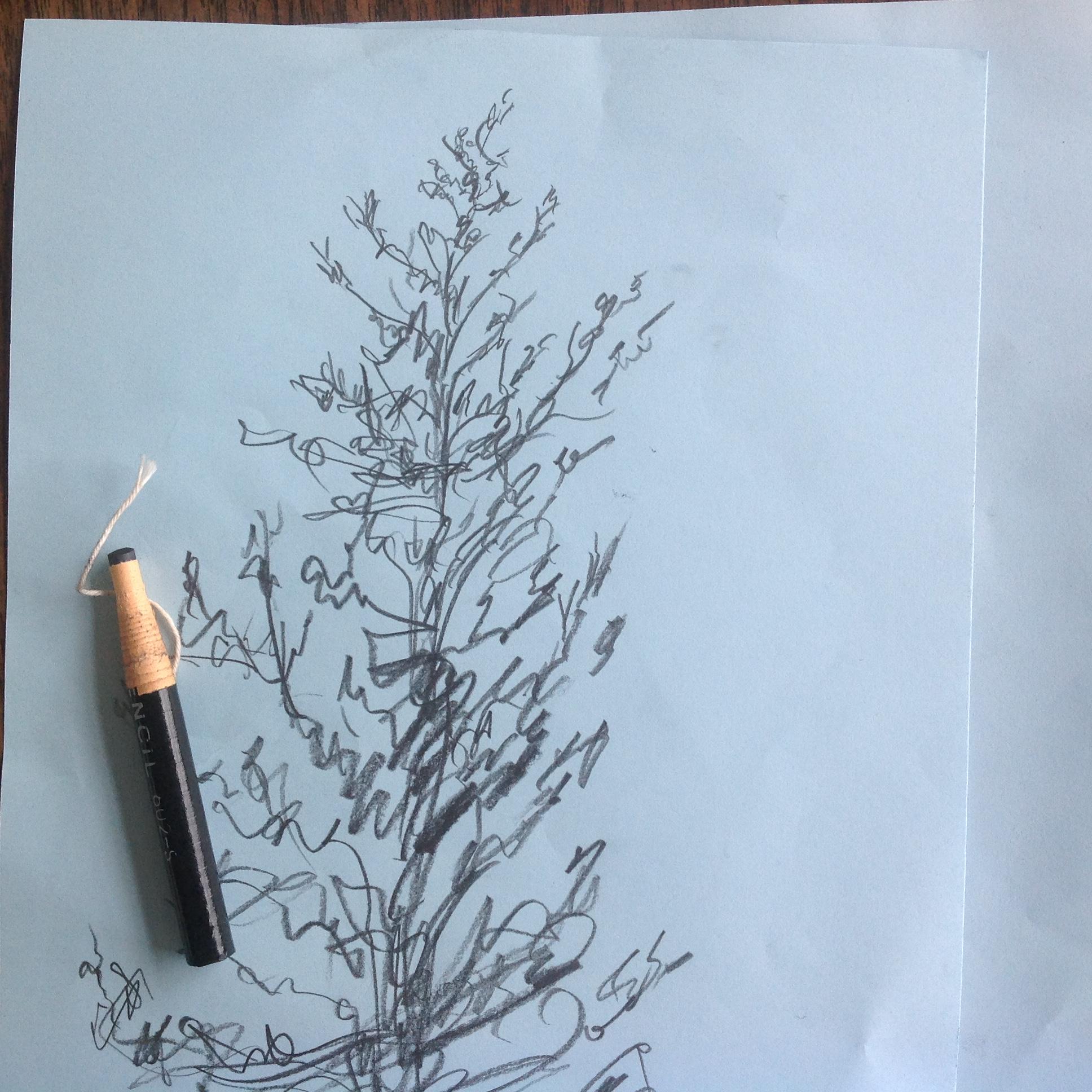 Calagrapgic tree