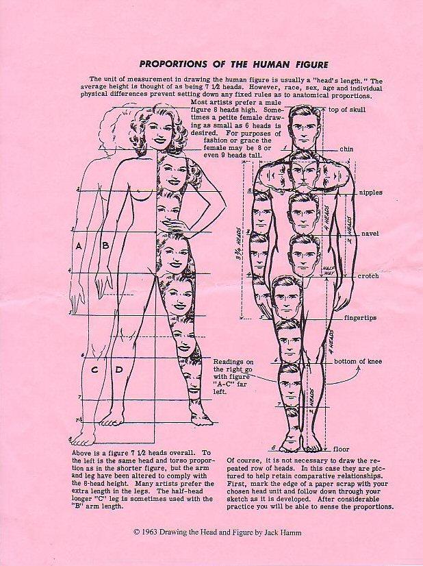 body-proportions0059-jpg