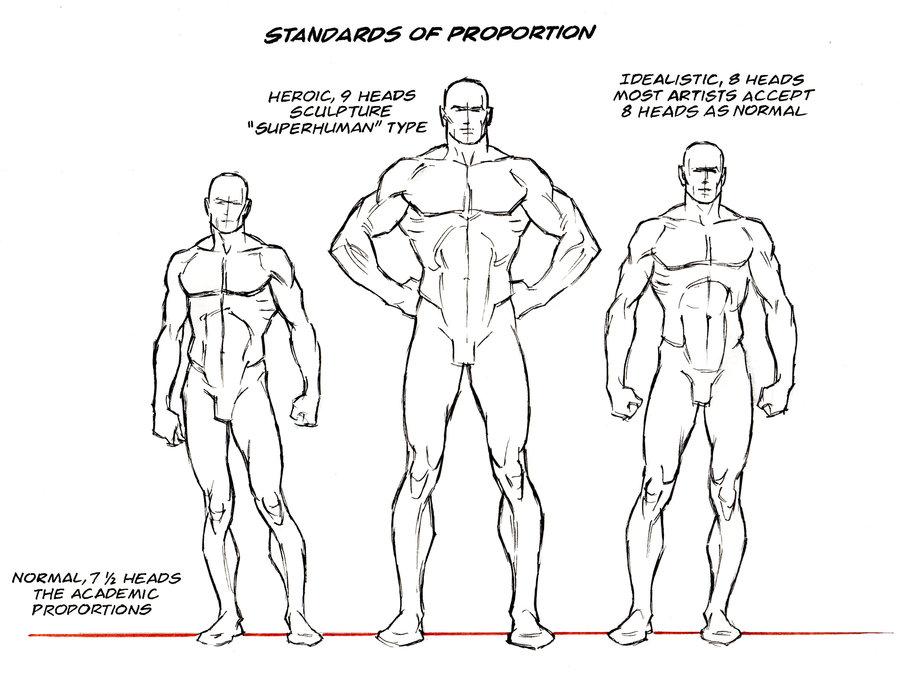 standard_proportions_by_abdonjromero-d5bg3t0