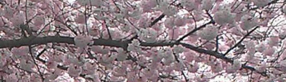 cropped-cherryheader.jpg